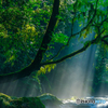 夏の菊池渓谷 #6