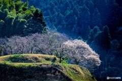 里山にも春が来た