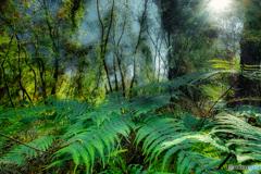 御所ヶ岳の森 #3