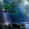 夏の菊池渓谷 #10