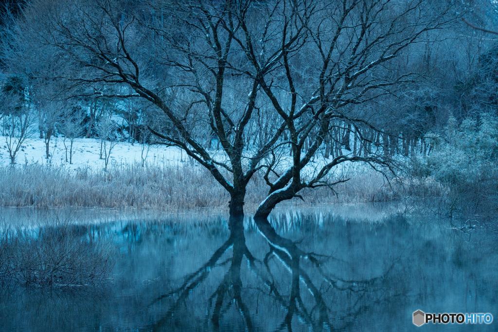 湖上の樹(1)