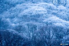 2020 冬 英彦山の森 #9