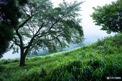 2020 夏 英彦山の森 #3