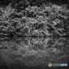 Reflection(モノクロ)#1