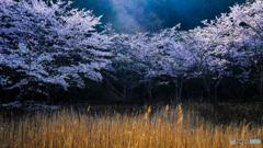 春の日差しに輝く