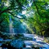 夏の菊池渓谷 #11