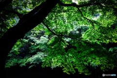 2020 夏 英彦山の森 #2