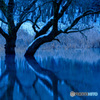 湖上の樹(3)
