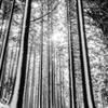 2020 冬 英彦山の森 B&W #2