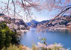湖畔の桜 #2