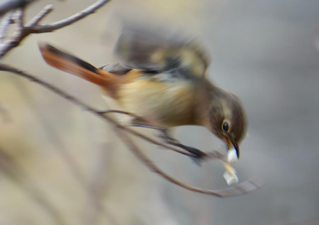 鳥撮り初心者 4)