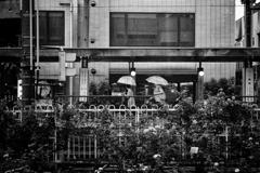 雨の三ノ輪橋駅