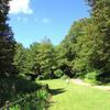 夏の大池公園