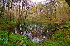 Green pond。