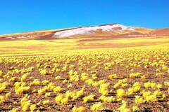 黄輝平野。