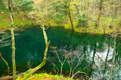 「Green pond。」のGreen色。