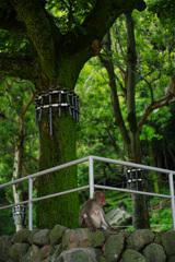 苔生す大木