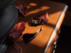 秋の燈 1