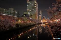 大岡川沿い夜桜散策 #11