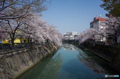 大岡川桜探訪 #11