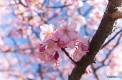 春の足音 #3