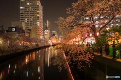 大岡川夜桜探訪 #2