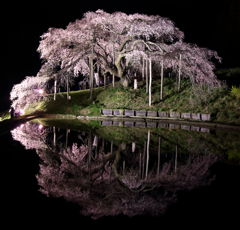 中島の地蔵桜2017