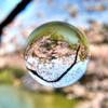 封印された桜の物語 - The closed SAKURA