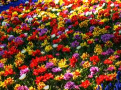 Colorful Flowers - 四月の花々