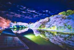 千鳥ヶ淵 夜桜景色