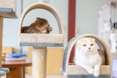 猫アパートメント