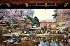 2017 靖国神社に満開の春が来た!