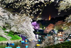 千鳥ヶ淵と東京タワー
