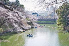 千鳥ヶ淵の小舟と桜花