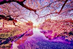 妖桜の流曲