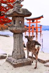 厳島神社の鳥居と鹿さん