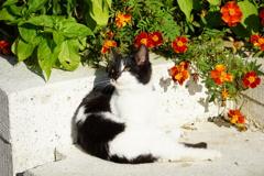 トルコの子猫 野良猫だより