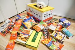 ヤマザキ パンの夏祭り当選しました。新しい家族の紹介です。2