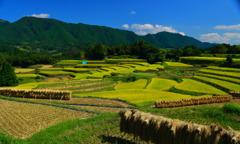 熊本県美里町洞岳秋の夏水の棚田