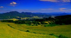9月の岳の棚田