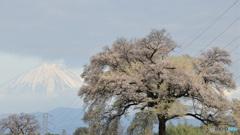 富士に逢いたくて 427