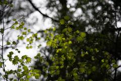 新緑の思い出