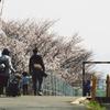 春だんらん