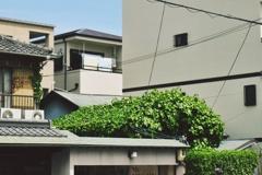 新緑の屋根