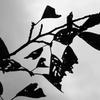 秋の虫食いアート