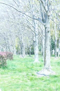 春から初夏へ (4)