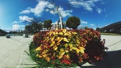 色の葉っぱ