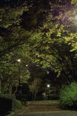 夜の公園で・・・#1