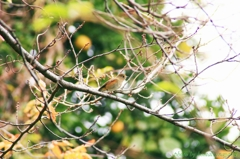 鳥ちゃん撮れた#1