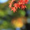 枝葉季節 秋色中 #10